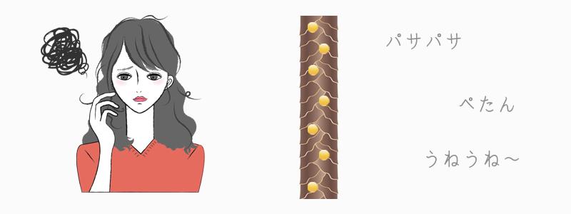 水を吸う髪(吸水毛)